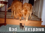 funny_pictures_1_cat_2_dogs_Funnies_3_Video_Game_Edition-s450x337-274957-580.jpg